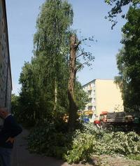 Zgłoś usuwanie drzewa
