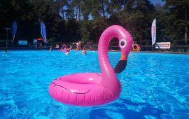 Na zdjęciu: różowy pływający flaming