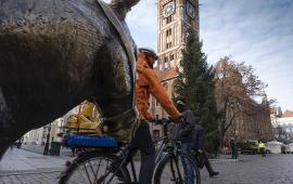 Na zdjęciu: rowerzysta przejeżdzający obok montowanej choinki