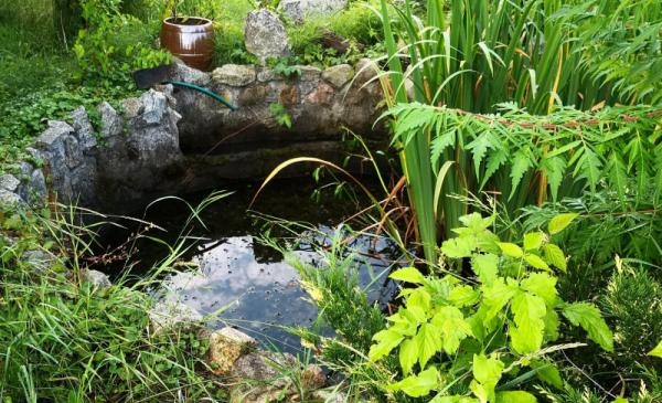 Na zdjęciu widać odrodowy zbiornik wodny - oczko wodne