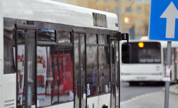 zdjęcie autobusów