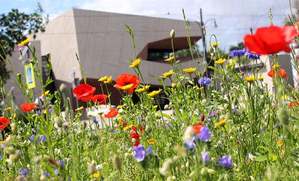 Kwietna łąka z CKK Jordanki w tle, fot. Adam Zakrzewski