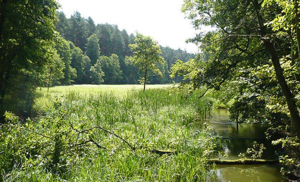 zdjęcie leśnej łąki