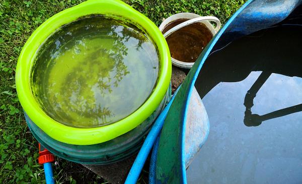Na zdjęciu widać plaskikowe beczki, do których zbierana jest deszczówka