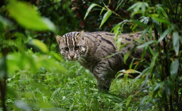 taraj z toruńskiego ogrodu zoobotanicznego, fot. Sylwia Szerszeń