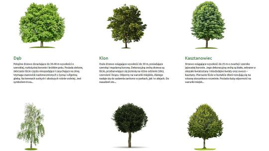 Zielony Toruń - Moje drzewo