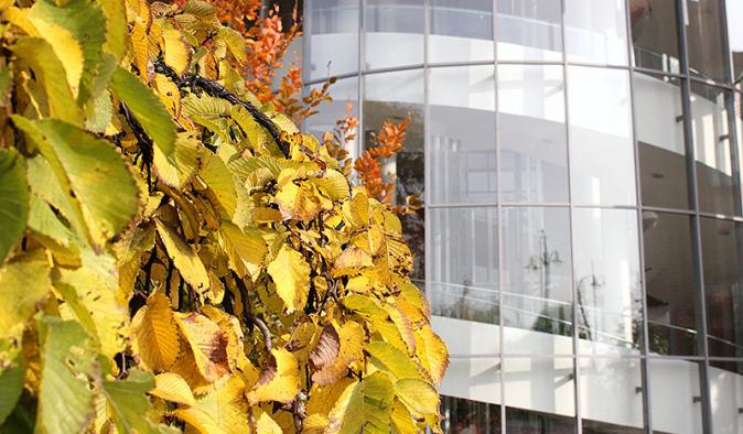 Budynek CSW i żółte liście