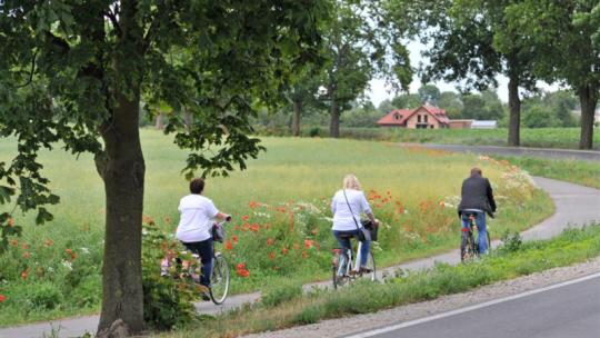 Trzy osoby jadące na rowerach w krajobrazie pól, maków i drzew