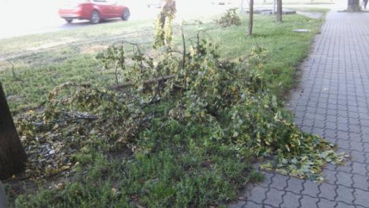 Na zdjęciu: połamane drzewo