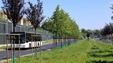 Na zdjęciu: trawa przy Trasie Średnicowej i przejeżdzający obok autobus