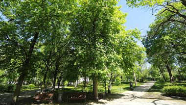 park na Bydgoskim Przedmieściu