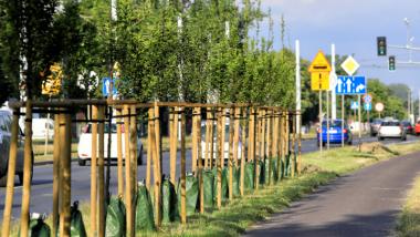 Drzewka z treegatorami przy ul. Skłodowskiej-Curie