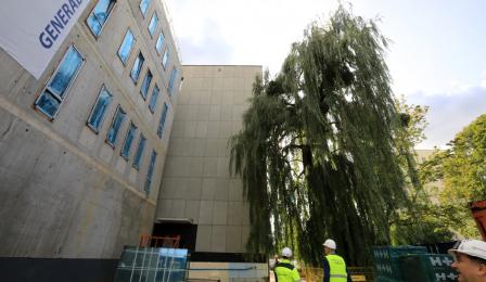 Gmach budowanego Sądu Rejonowego , na pierwszym planie okazałe drzewo