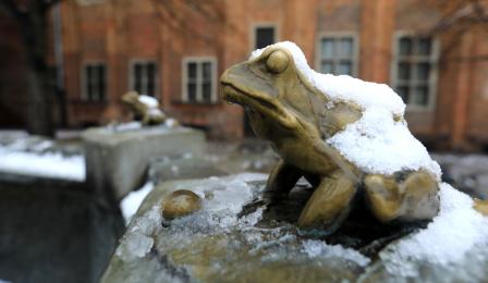 Żabka w fontannie Flisaka w śniegu na Rynku Staromiejskim, fot. Sławomir Kowalski