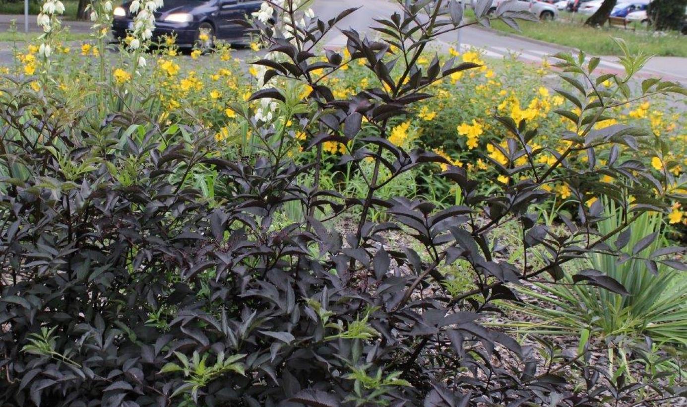 Na zdjęciu widać kwiaty rosnące na rondzie Zbigniewa Herberta